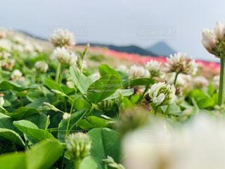 花のクローズアップの写真・画像素材[3140100]