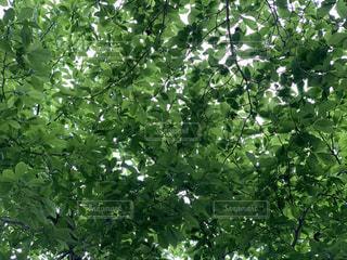 木のクローズアップの写真・画像素材[3140920]
