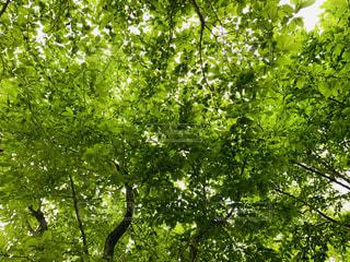 森の中の木の写真・画像素材[3140921]