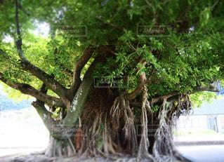 木のクローズアップの写真・画像素材[3141178]