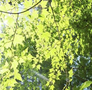 木のクローズアップの写真・画像素材[3141679]