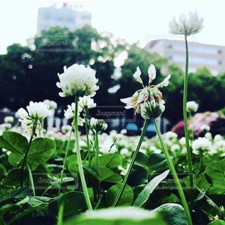 花園のクローズアップの写真・画像素材[3141680]