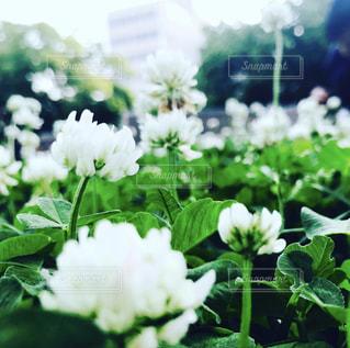 花園のクローズアップの写真・画像素材[3141681]