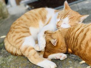 地面に横たわるオレンジと白の猫の写真・画像素材[3159221]