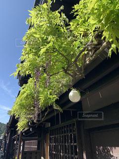 空,建物,森林,屋外,窓,景色,家,樹木,新緑,藤棚,草木,桜が終わり