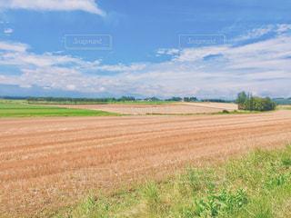 大きな空と広い畑の写真・画像素材[3144536]