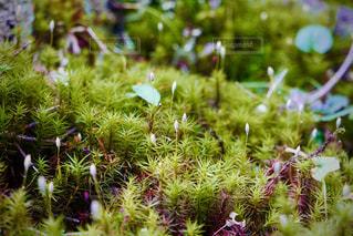 小さな森の世界の命の写真・画像素材[3147371]