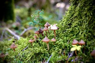 小さな森の世界の写真・画像素材[3147373]