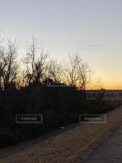 自然,風景,空,森林,屋外,太陽,朝日,雲,暗い,枯れ木,樹木,正月,お正月,日の出,新年,初日の出,草木,枯木