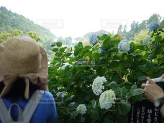花,屋外,山,樹木,麦わら帽子,人,草木,ガーデン