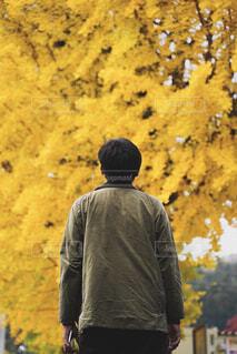 イチョウの木を見上げる男性の写真・画像素材[3732143]