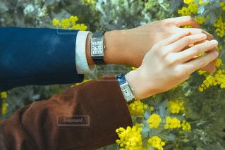 春の写真・画像素材[4222043]