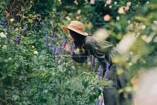 夏香る庭の写真・画像素材[4335725]