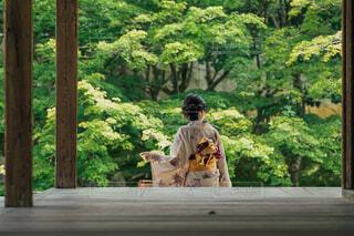 新緑の京都の写真・画像素材[4415359]