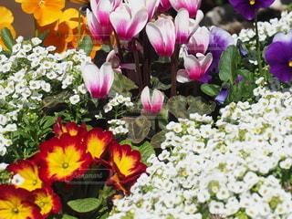 花,春,フラワー,黄色,景色,鮮やか,白い花,花壇,草木