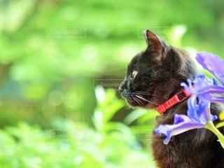 花と黒猫の写真・画像素材[3363147]