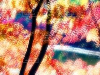 水辺の紅葉の写真・画像素材[3715808]