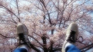 春万歳!の写真・画像素材[4210698]