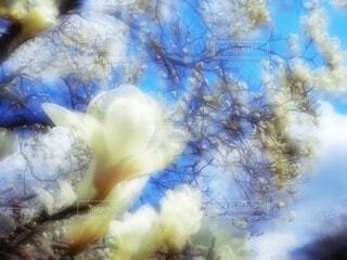 春が降ってきた!の写真・画像素材[4210695]