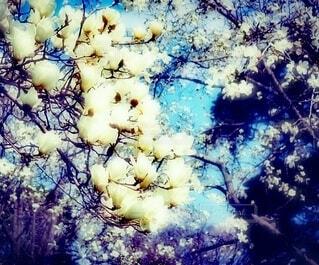 春が降ってきた!の写真・画像素材[4210696]