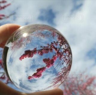 球体の中の春の写真・画像素材[4234635]