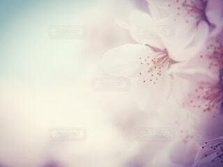 花のクローズアップの写真・画像素材[4252846]