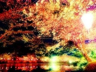 水辺の夜桜の写真・画像素材[4252869]