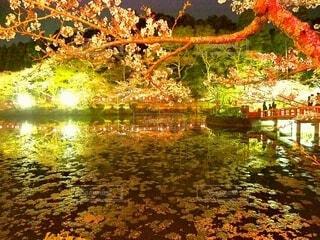 夜桜の写真・画像素材[4273728]