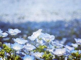 花のクローズアップの写真・画像素材[4292587]