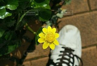 花とおじさんの靴の写真・画像素材[4295062]