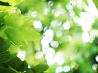 新緑の季節の写真・画像素材[4408440]