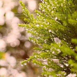 水玉きらきらの写真・画像素材[4529559]