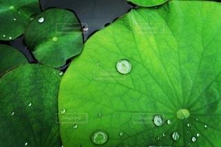 天然の水玉の写真・画像素材[4564517]