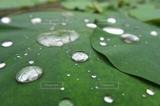 天然の水玉模様の写真・画像素材[4564516]