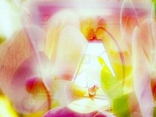 花とスタンドの写真・画像素材[4574550]