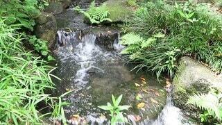 自然,風景,緑,植物,水,透明,川,水面,葉,小川,爽やか,樹木,涼しい,癒し,涼しげ,グリーン,マイナスイオン,みどり,せせらぎ,清涼感,水の音,水流,小さな川