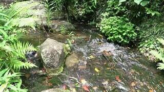自然,風景,屋外,植物,透明,川,水面,葉,小川,滝,爽やか,樹木,涼しい,癒し,涼しげ,グリーン,マイナスイオン,せせらぎ,流れ,草木,清涼感,水の音,水流,小さな川
