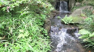 風景,屋外,緑,植物,水,透明,水面,葉,小川,滝,草,爽やか,樹木,涼しい,癒し,涼しげ,グリーン,マイナスイオン,みどり,流れ,草木,清涼感,水流,流れる,小さな川,小さな滝