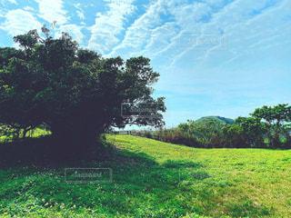 大きな木と草原の写真・画像素材[3158014]