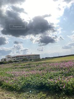 花畑と校舎の写真・画像素材[3170158]