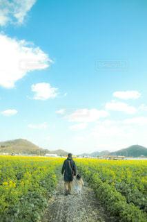 自然,空,花,菜の花,景色,こども,父,娘