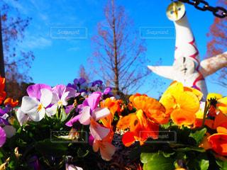 花,夏,お花畑,カラフル,太陽の塔,万博記念公園,岡本太郎,大阪万博,多色