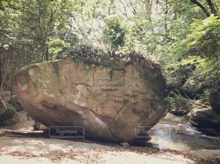 自然,屋外,森,緑,川辺,川,樹木,岩,リラックス,石,草木,森の中