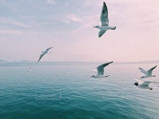 海を飛ぶカモメの群れの写真・画像素材[3543943]