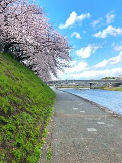 川と桜の写真・画像素材[4281065]