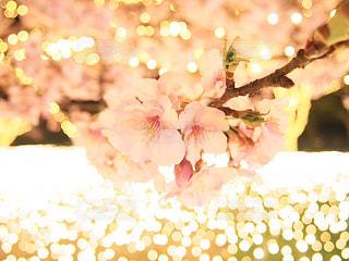 桜の写真・画像素材[3153250]