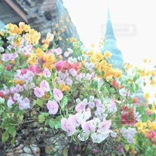 花のクローズアップの写真・画像素材[3153629]