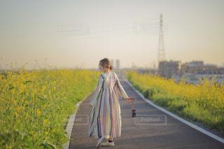 菜の花の道の写真・画像素材[3153906]