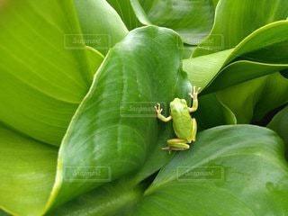緑の植物のクローズアップの写真・画像素材[3154394]