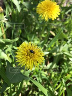黄色い花の写真・画像素材[3154848]